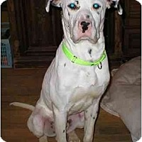 Adopt A Pet :: Luke - Milwaukee, WI