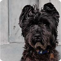 Adopt A Pet :: Watkins - Milan, NY