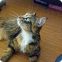Adopt A Pet :: Sofia - Escondido, CA