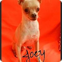Adopt A Pet :: Joey - Escondido, CA