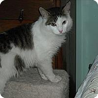 Adopt A Pet :: Charlie (Loveable Lapsitter)!) - Arlington, VA