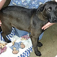 Adopt A Pet :: Remy*ADOPTED!* - Chicago, IL