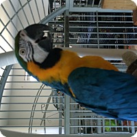 Adopt A Pet :: Jocko - Punta Gorda, FL