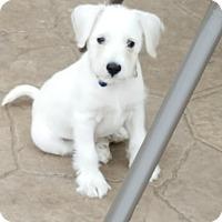 Adopt A Pet :: BB Max - Middlesex, NJ
