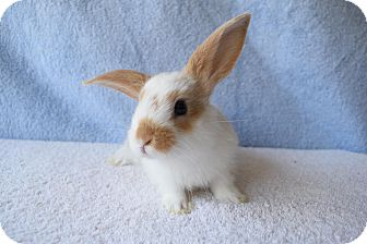 Other/Unknown Mix for adoption in Fountain Valley, California - Skittles