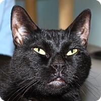 Adopt A Pet :: Gwyneth - North Branford, CT
