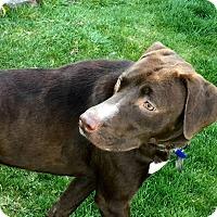Adopt A Pet :: Jersey - Toledo, OH