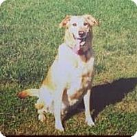 Adopt A Pet :: Patty - Richmond, VA