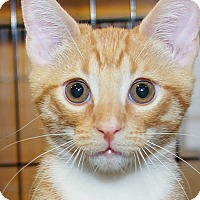 Adopt A Pet :: Mac - Irvine, CA