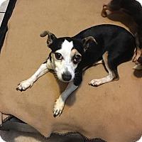 Adopt A Pet :: Lucille - Brooksville, FL