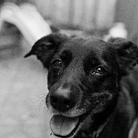 Adopt A Pet :: FRIPP - Pt. Richmond, CA