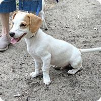 Adopt A Pet :: Carter - Tavares, FL