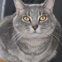 Adopt A Pet :: Ivy - Amelia, OH