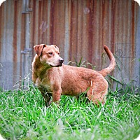 Adopt A Pet :: Redd - Virginia Beach, VA