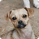 Adopt A Pet :: Ellana B Lap baby