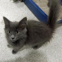 Adopt A Pet :: Cantaloupe B - Vienna, OH