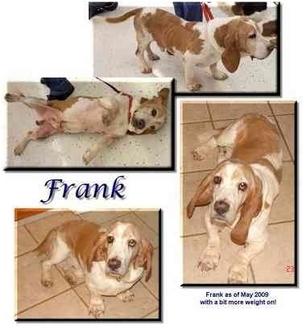 Basset Hound Dog for adoption in Marietta, Georgia - Frank