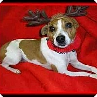 Adopt A Pet :: Maggie - Omaha, NE
