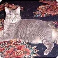 Adopt A Pet :: Setti (intelligent!) - Portland, OR