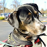 Adopt A Pet :: Rayne needs love - Sacramento, CA