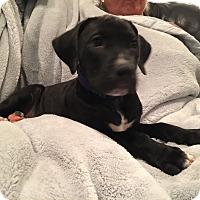 Adopt A Pet :: Emmet - Lewisville, IN