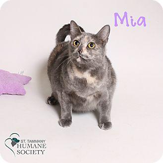 Domestic Shorthair Cat for adoption in Covington, Louisiana - Mia