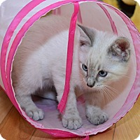 Adopt A Pet :: Takota - Davis, CA