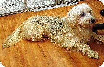 Terrier (Unknown Type, Medium) Mix Dog for adoption in Deer Park, Texas - Prancer