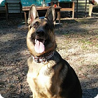 Adopt A Pet :: Siren - Green Cove Springs, FL