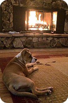 Australian Shepherd Mix Dog for adoption in Wichita Falls, Texas - Ginger