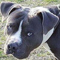 Adopt A Pet :: Vincent - Tuttle, OK