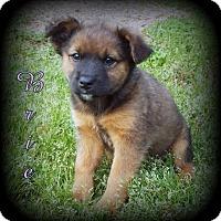 Adopt A Pet :: Brie - Denver, NC