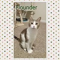 Adopt A Pet :: Flounder - Cedar Springs, MI