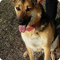 Adopt A Pet :: FAVOR - Winnipeg, MB