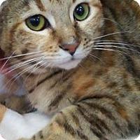 Adopt A Pet :: Reese - LaGrange Park, IL