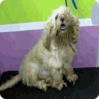 Adopt A Pet :: Ceaser - Denver, CO