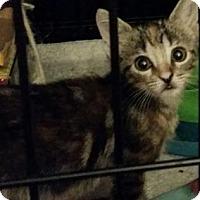 Adopt A Pet :: Odessa - Gulfport, MS