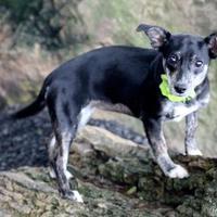 Adopt A Pet :: Heather - Dalton, GA