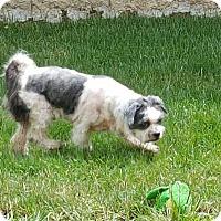 Adopt A Pet :: Mortimer - Sheridan, OR