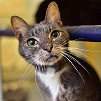 Adopt A Pet :: MARY - West Palm Beach, FL