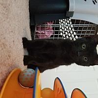 Adopt A Pet :: Bruce - Homewood, AL