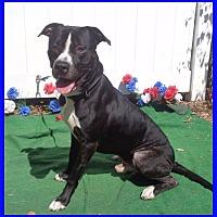 Adopt A Pet :: JESSY - Marietta, GA