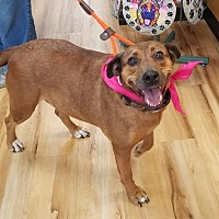 Adopt A Pet :: Mudder - Little Rock, AR