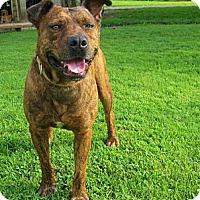 Adopt A Pet :: Tigger - Cincinnati, OH