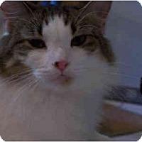 Adopt A Pet :: Allie - Elkton, MD