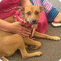 Adopt A Pet :: Buttercup - Jacksboro, TN