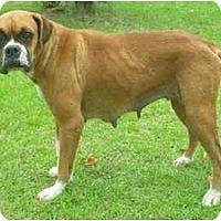 Adopt A Pet :: Lotus - Thomasville, GA