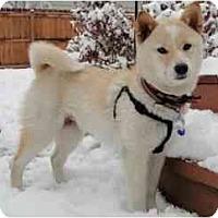 Adopt A Pet :: Koko - Round Lake, IL