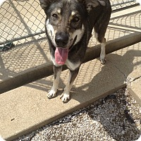 Adopt A Pet :: #371-14 @ Animal Shelter - Zanesville, OH