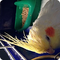 Adopt A Pet :: Juan - St. Louis, MO